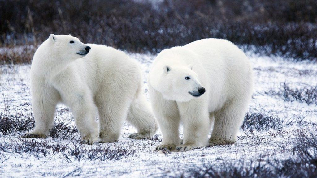 WWF Living Planet Report biodiversiteit
