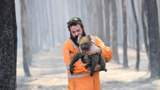 Australië bosbranden koala brandweerman