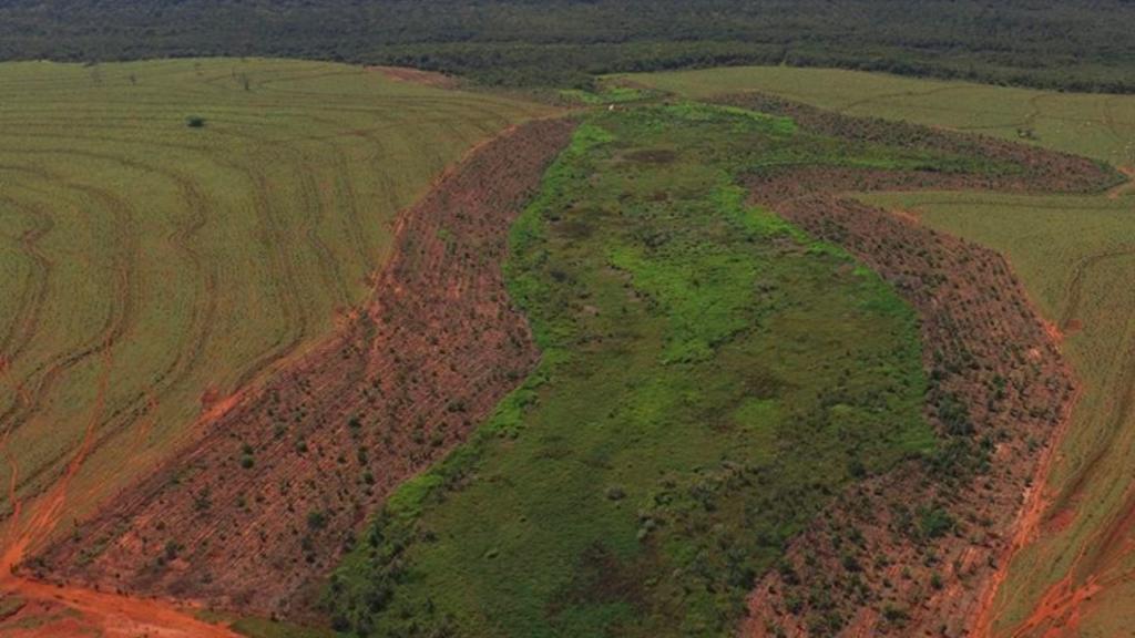 Amazonewoud - Ecosia
