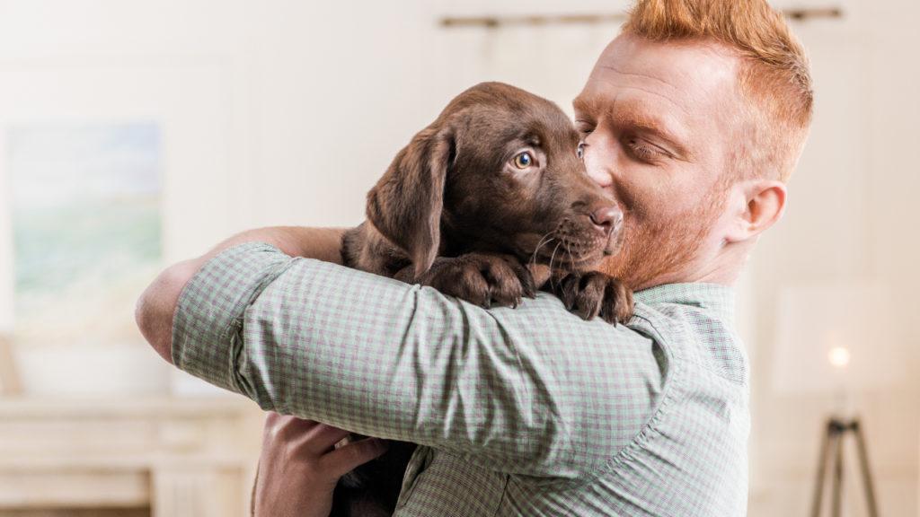 Labrador Honden Puppy Mensenjaren