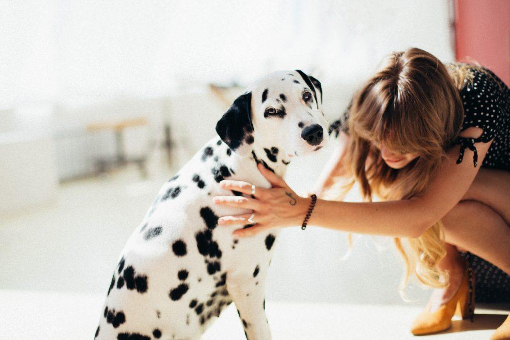 Hond beter dan lief