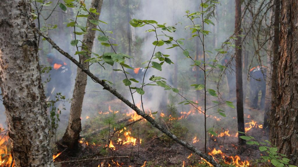 bosbranden Siberië