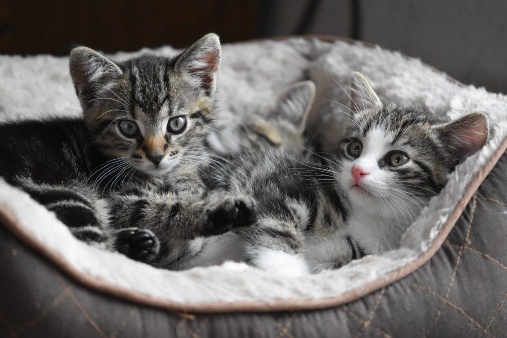 Zelfgemaakt kattenvoer is ongezond