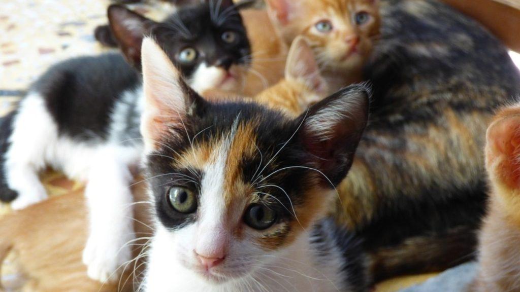 Gaia campagne castratie sterilisatie katten